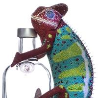 Absolut chameleon