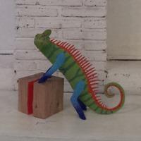 Mimus, an award winning chameleon