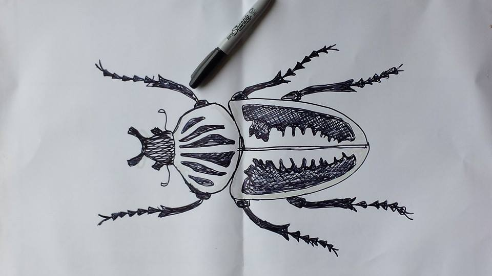 Sketch of the Goliath beetle.