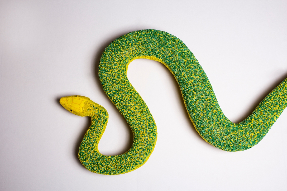 Lola snake front view