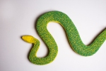 Lola, the hybrid python.