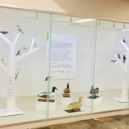 On exhibit now: the Subway Station Exhibition – Birds of Mexico City
