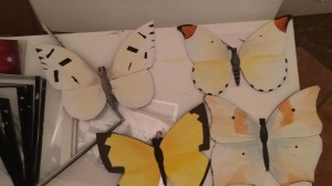 Butterflies of Mexico City, at my studio.