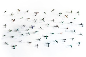 Hummingbirds of North America. Sustainable art by Davit Nava.