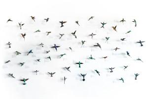 Hummingbirds of North America. Sustainable art by Davit Nava.