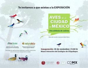 Aves de la Ciudad de México - una sinfonía de colores by Davit Nava.