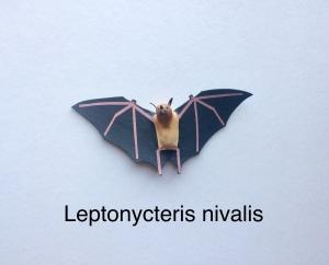 Leptonycteris nivalis